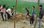 2007年植树节